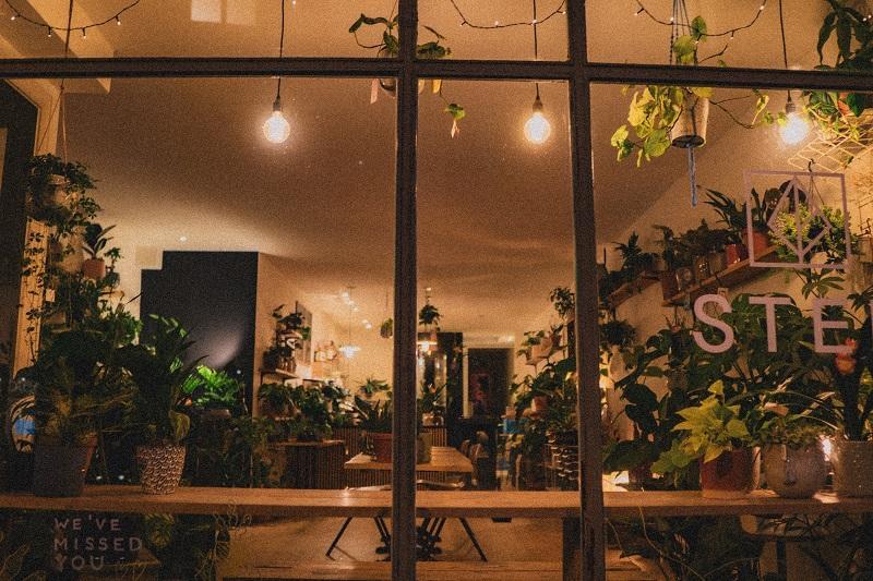 plantenwinkel, planten, shopify, magento, kamerplanten, ondernemen, tips